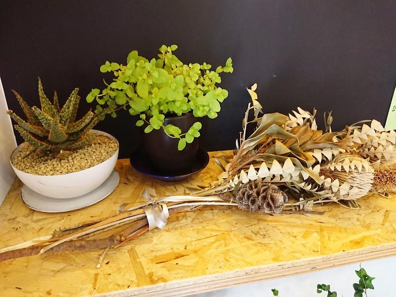B-FRITES(ビーフリッツ)観葉植物 わさび印認定!葵わさびの静岡散歩